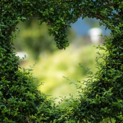 Heart shaped plant
